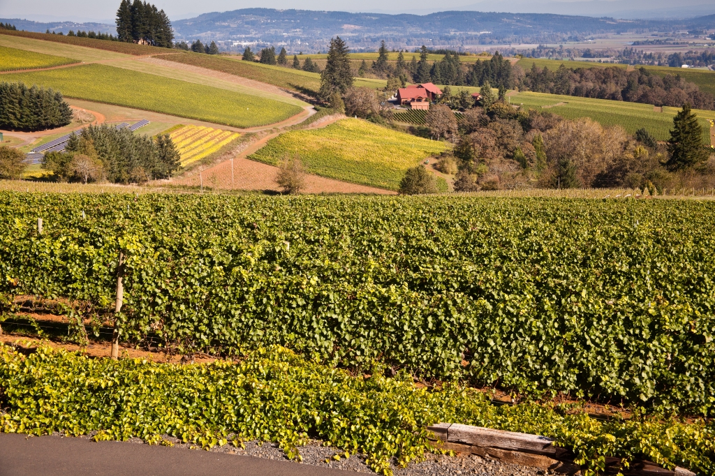 Willamette Valley Famous for its Pinot Noir, Oregan, USA© 2010 Nick Katin