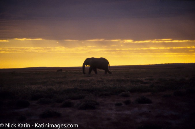 An elephant strolling through the scurb at sunset in Etosha national Park, Namibia