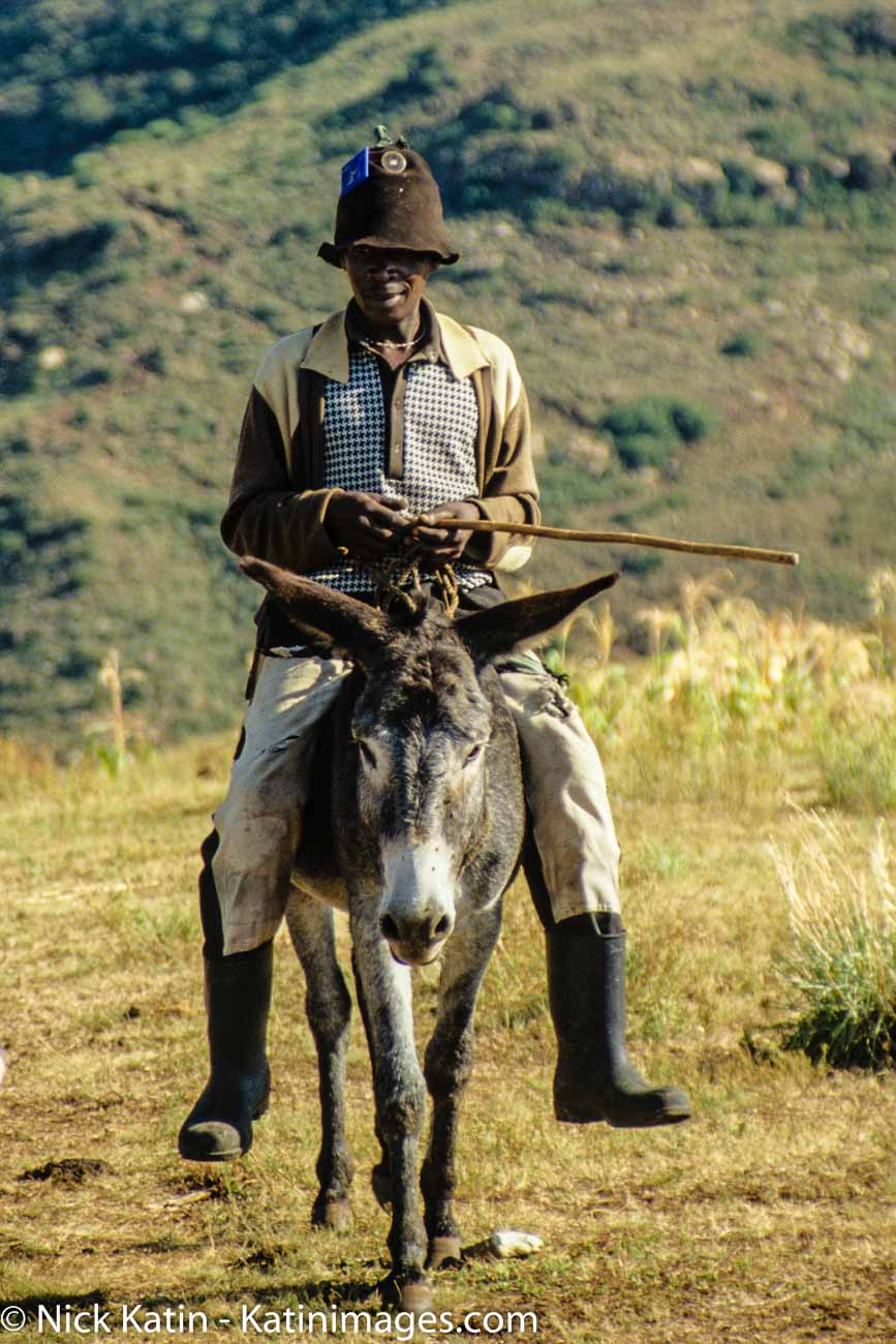 In the mountainous Lesotho, ponies are the major form of transport.