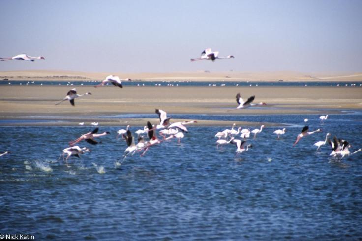 Flamingos at Walvis Bay in Namibia