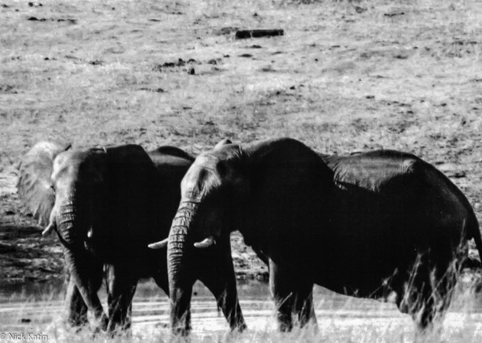 Elephants in Hwange NP in Zimbabwe