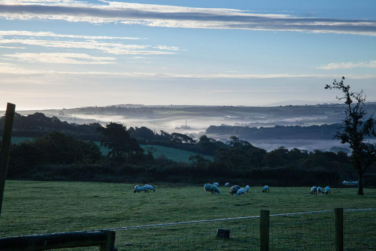 Early morning mist at Winscott farm, nr Bideford, Nth Devon, England