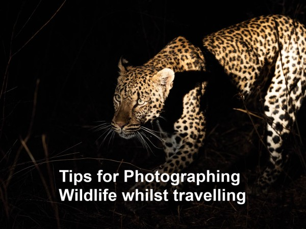 16 Tips for Photographing Wildlife whilst travelling