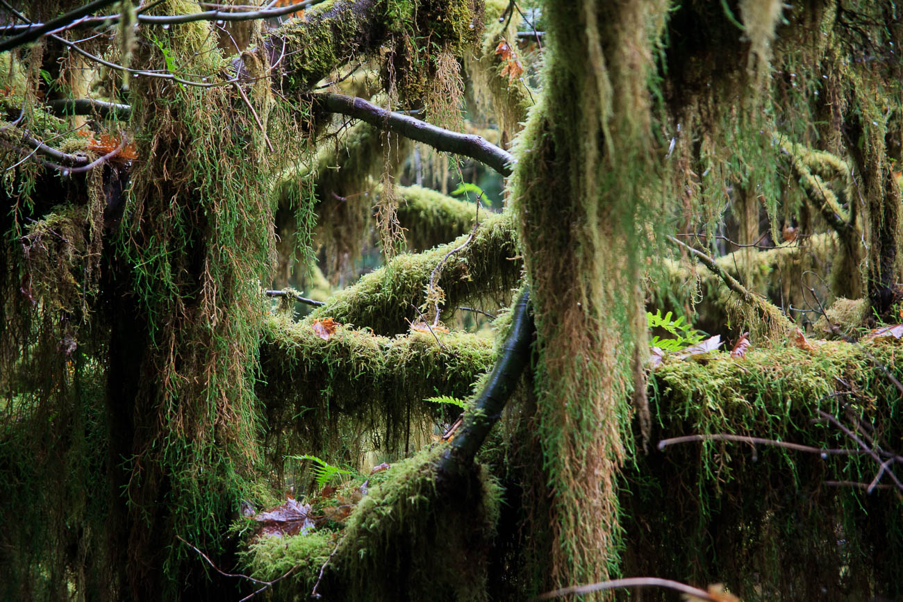 Hoh river rainforest on the Olympic Peninsula, Washington, USA. Understanding the Basics of Digital Travel Photography