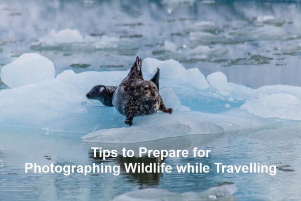 Tips to prepare for photographing wildlife while travelling